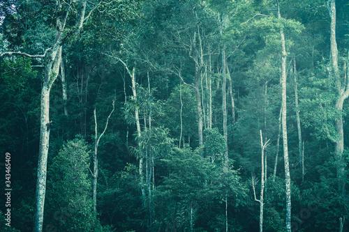 tropikalny-las-z-liscmi