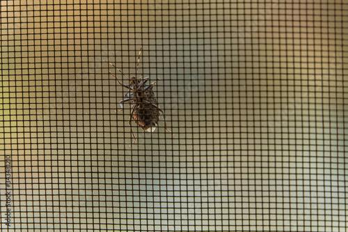Photo Window glass beetle bug climbing
