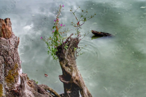 Fototapety, obrazy: High Angle View Of Plat Growing On Tree Trunk At Lakeshore