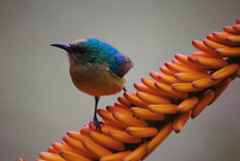 Close-up Of Bird Perching On Yellow Buds