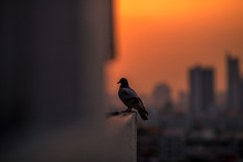 Blurry Background,pigeons Flyi...