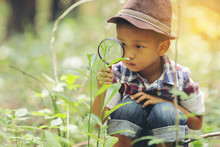 An Asian Boy Is Using A Magnifying Glass To Look At The Leaves. Conceptual. Knowledge About Activities Outside The Classroom..