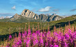 canvas print picture - Flowers field on the background of alpine mountain peaks in the Dolomites Alps. Beautiful natural landscape. Amazing nature scenery