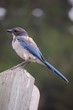 Low Angle View Of Blue Bird Perching On Wooden Fence
