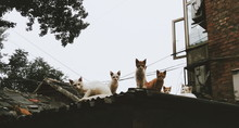 Group Of Stray Cats On Roof