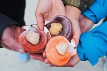 Fresh Sea Bivalves Or Clams Ar...