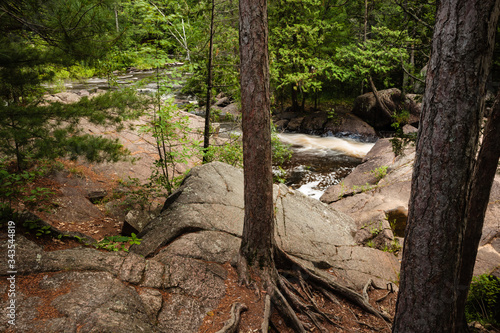 Red pines appear to grow out of the boulders along the shoreline at the upper fa Canvas Print