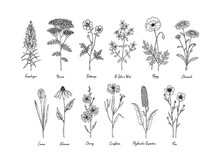 Set Of Hand Drawn Meadow Flowe...