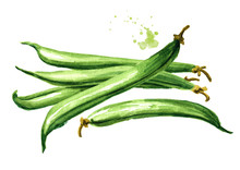 Fresh Green Beans. Watercolor ...
