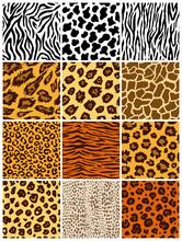 Animal Seamless Pattern Set. M...