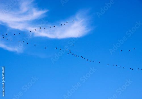 Ptaki w kluczu nad Bałtykiem Fototapet
