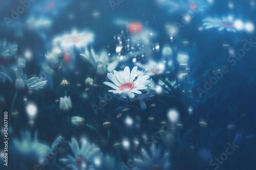 Fototapety, obrazy: Dramatic flower background; Nature Background