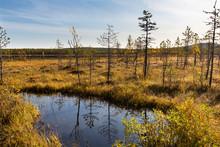 Lapland Swamp