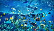 Aquarium, Okinawa Churaumi, Ok...