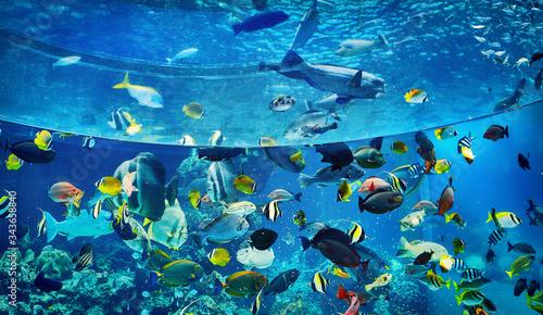 Fototapeta aquarium, okinawa churaumi, okinawa aquarium, large aquarium, largest aquarium, tropical fish, aquatic fish, deep blue obraz