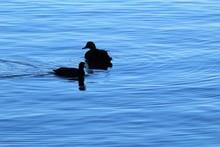 Silhouette Bird On Lake Against Sky