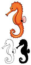 Set Of Seahorse Cartoon