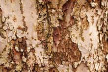 Natural Wooden Texture Backgro...