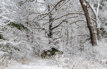 Early Spring Snow Storm Creates A Wonder Land With A Tiny Forgotten Shack Under Neath Frosted Trees