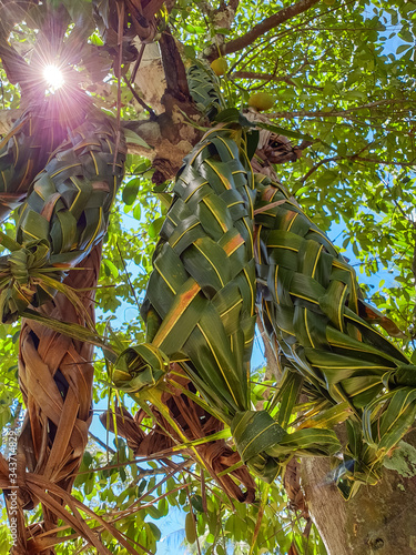 Kora or Kro is a weave that is used to wrap or wear fruits such as jackfruit and Champa Fototapeta