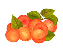 Pile Of Ripe Round Apricots With Leaves Isolated On White Background Vector Illustration