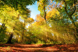 Fototapeta Perspektywa 3d - Colorful autumn forest landscape with warm sun rays illumining the foliage and a path leading through the trees