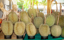 """Durian The King Of Fruit """"Mont..."""