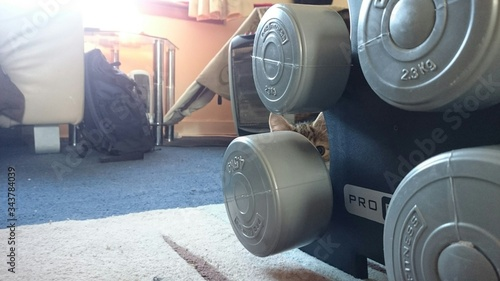 Photo Kitten Hiding Behind Dumbbells At Home