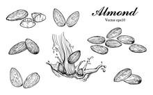 Illustration Hand Drawn Sketch, Set Almond Seeds And Almond Milk, On White Background, Outline Monochrome Ink Style For Artwork, Logo, Packaging Vector Eps10.