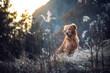 Golden Retriever in frostiger Winterlandschaft