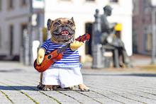 French Bulldog Dog Dressed Up As Street Perfomer Musician Wearing A Funny Costume With Striped Shirt And Fake Arms Holding A Toy Guitar Standing In City On Sunny Day