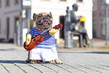 French Bulldog Dog Dressed Up ...