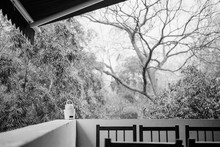 Trees Seen From Balcony During...