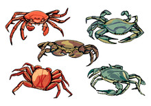 Collection Of Crabs Isolated I...