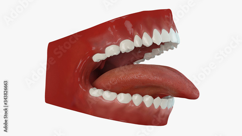 Photo 3d rendering of human teeth isolated on white