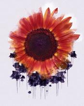 Red Poppy Flower. Beautiful Lu...