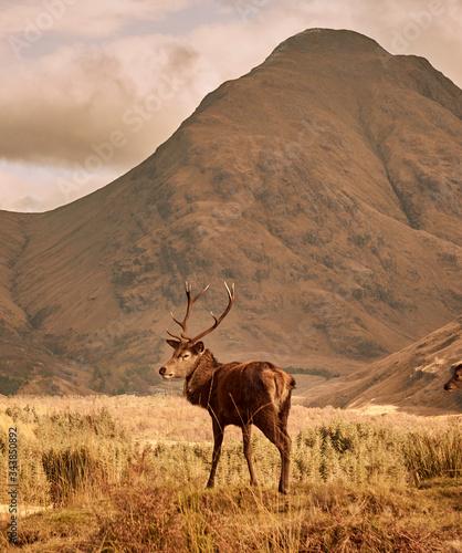 Scotland and Scottish highlands Canvas Print