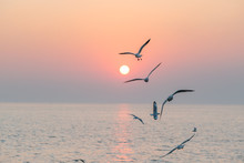 Beautiful Sunset With Flock Of...