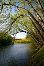 Overhanging Branches Create An Archway Of Spring Green Leaves Along The Shoreline Of The Vermillion River Near Utica, Illinois, USA.