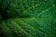 Green fresh leaves of mint, lemon balm close-up macro shot. Mint leaf texture. Ecology natural layout. Mint leaves pattern, spearmint herbs, peppermint leaves, nature background