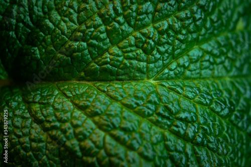 Obraz Green fresh leaves of mint, lemon balm close-up macro shot. Mint leaf texture. Ecology natural layout. Mint leaves pattern, spearmint herbs, peppermint leaves, nature background - fototapety do salonu