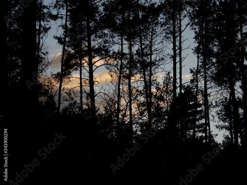 Fototapeta Zachód słońca między drzewami.  obraz