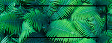 Summer Tropical Background, Fe...