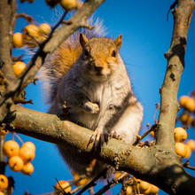 Squirrel On Tree Branch Against Sky