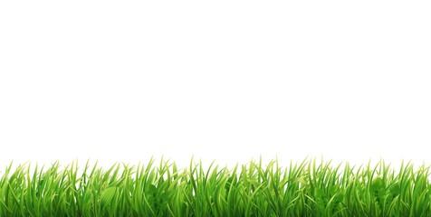 Green grass seamless border.