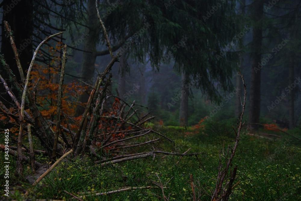 Fototapeta Tajemniczy las