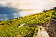 Lavaux, Switzerland: Lake Gene...