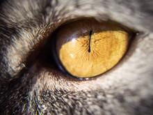 Cat's Yellow Eye Close-up, Macro