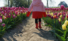 Little Girl Walking Through A ...