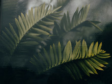 Close Up Of Fern Leaves Agains...